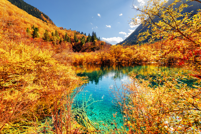 Autumn forest reflected in beautiful pond with azure water
