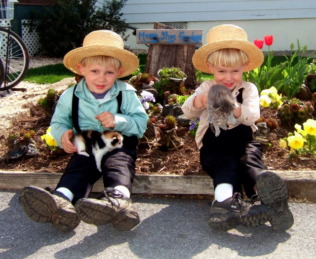 amish-boys-with-kittens