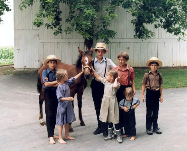 amish-children-with-colt