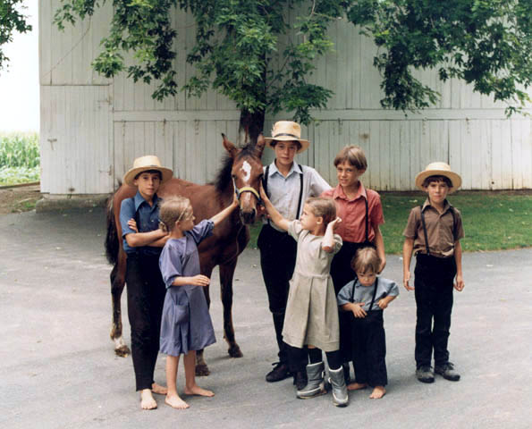amish-children-with-colt