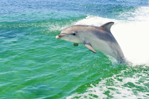 Dolphin spotting in marine tours