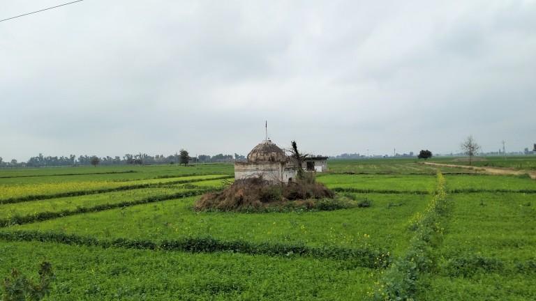 Mustard and wheat fields near Pul Kanjri (2)