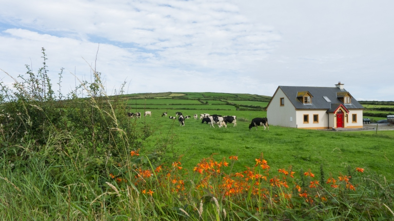 Meadow with cabin and farm animals