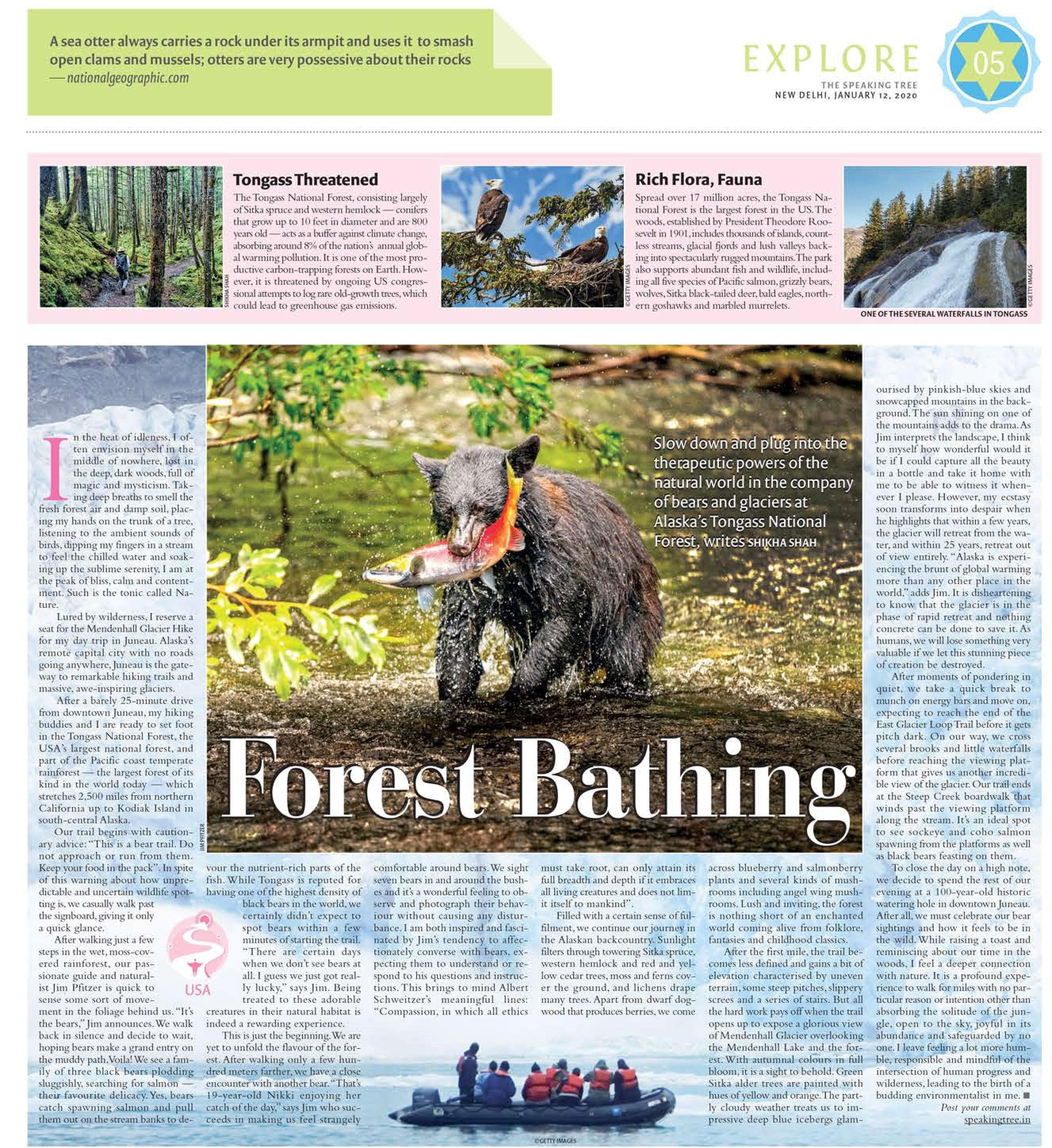 FOREST BATHING IN ALASKA (HIKE), THE SPEAKING TREE - JAN 12