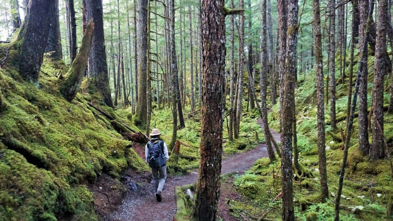 Hiking in the lush and inviting Tongass National Forest in Juneau, Alaska